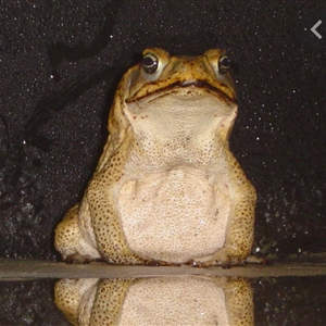 frog realizes..its quite uptown