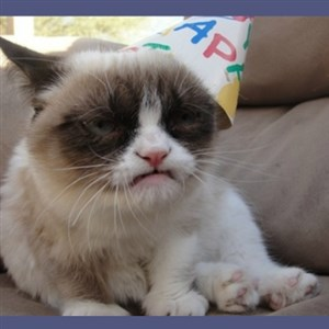 Birthday Grumpy Cat