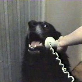 hello? yes this is dog