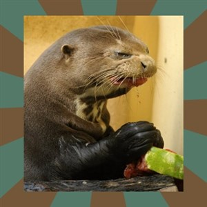 Watermelon Otter