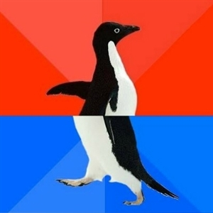 Social Success / Awkward Penguin