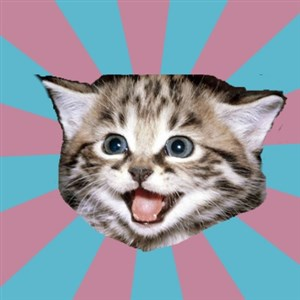 Overly-Excited-Cat