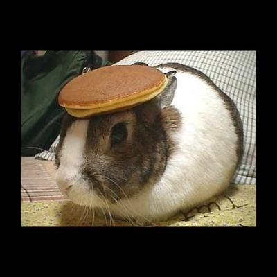 So Heres A Bunny With Pancake On His Head