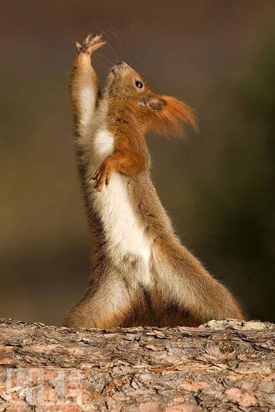 dramatic squirrel