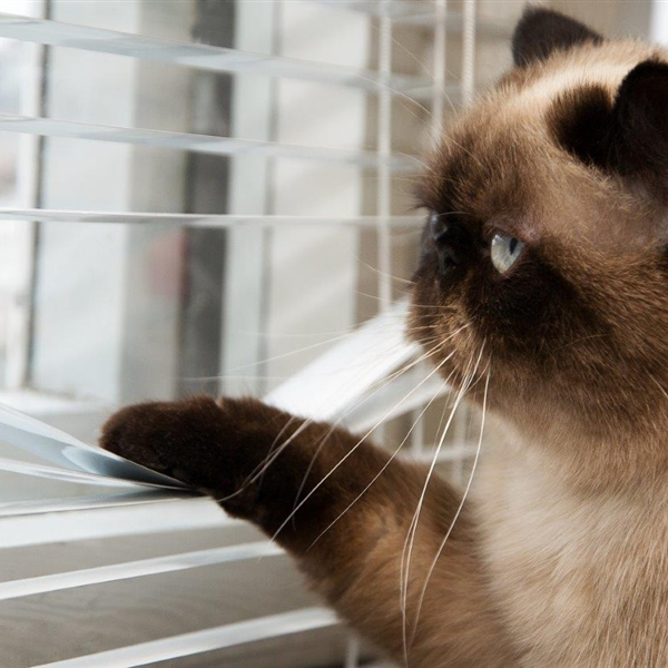 cat looking out window blinds cat looking out window blinds meme generator,