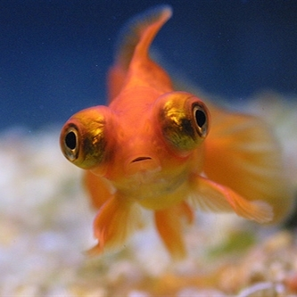 Ugly fish meme generator for Ugly fish pictures