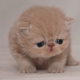 Super Sad Cat