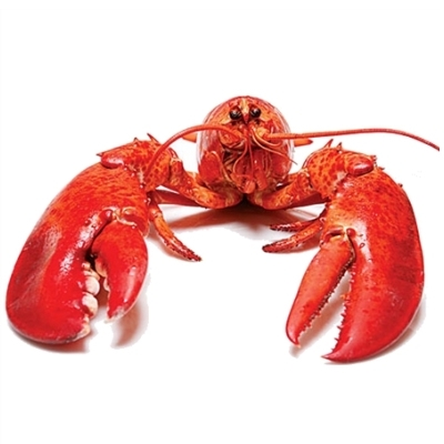 Unable to Relax and Have Fun Lobster