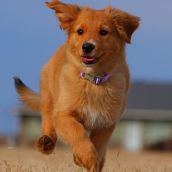 Ridiculously Photogenic Puppy