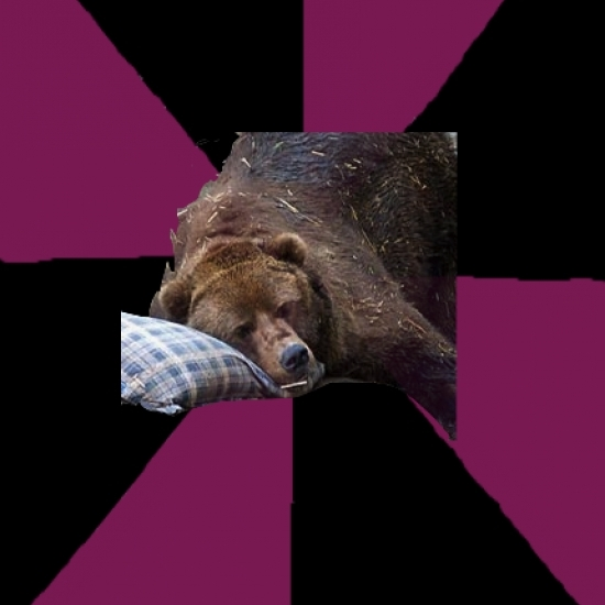 Sleep Disorder Grizzly
