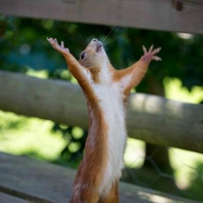 Praising Squirrel