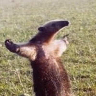 FUCK YOU, I'M AN ANTEATER