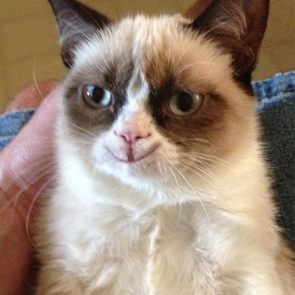 Grumpy Cat Happy Version