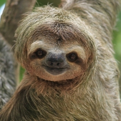 What did you say sloth