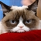 grumpy cat on red pillow
