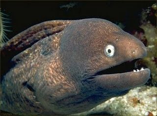Bad Joke Eel v2.0