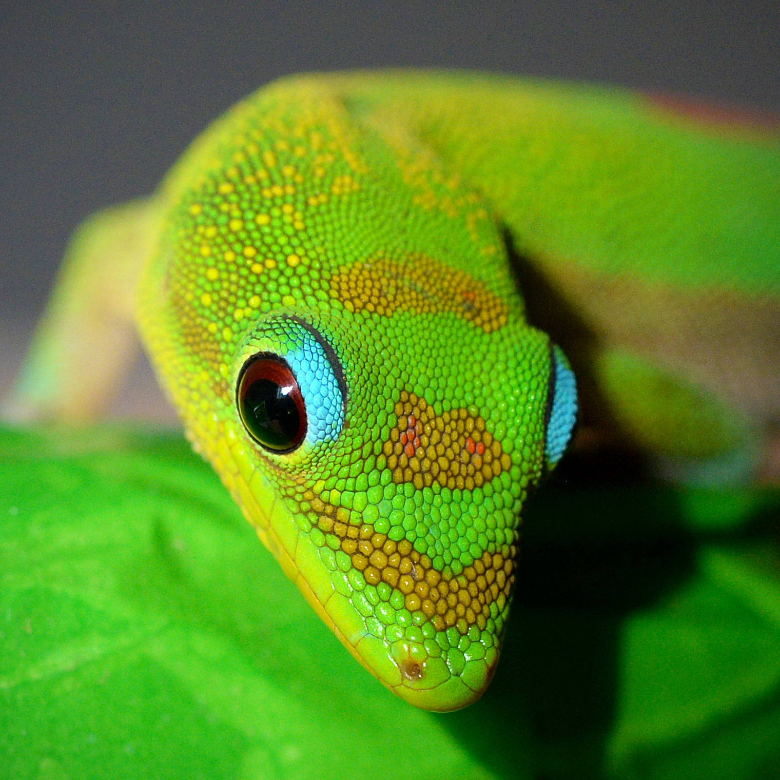 Mr. Gecko that is looking down