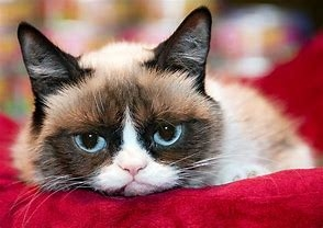 Grumpy Cat Dissapointment