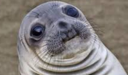 Da chubby seal approved