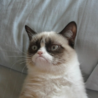 Grumpy Cat on Bed Pillow