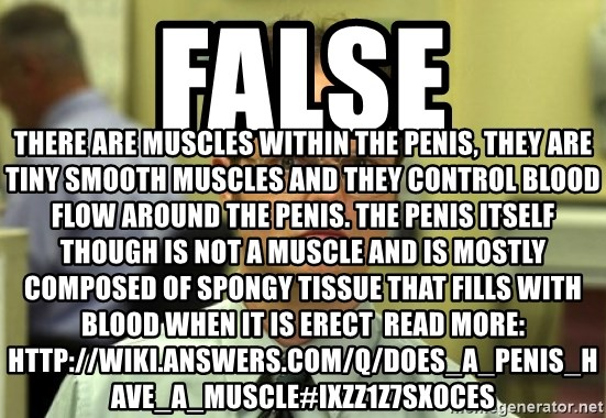 does penis have muscle