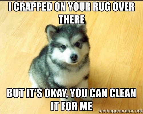 Baby Courage Wolf - I CRAPPED ON YOUR RUG OVER THERE but IT's okay, you can clean it for me