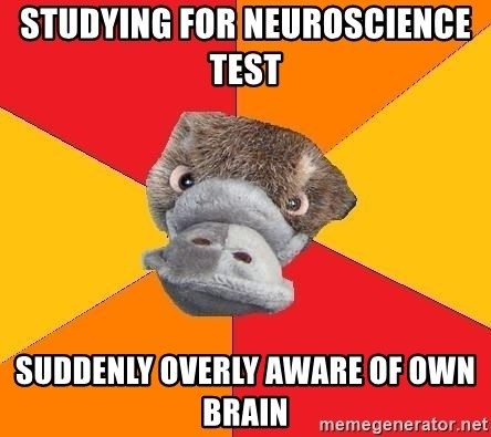 Psychology Student Platypus - studying for neuroscience test  suddenly Overly aware of own brain