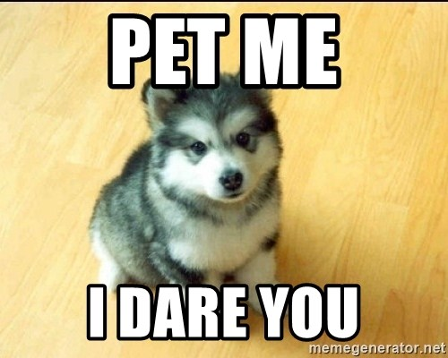 Baby Courage Wolf - Pet me i dare you