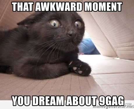 Paranoid cat - That awkward moment  you dream about 9gag