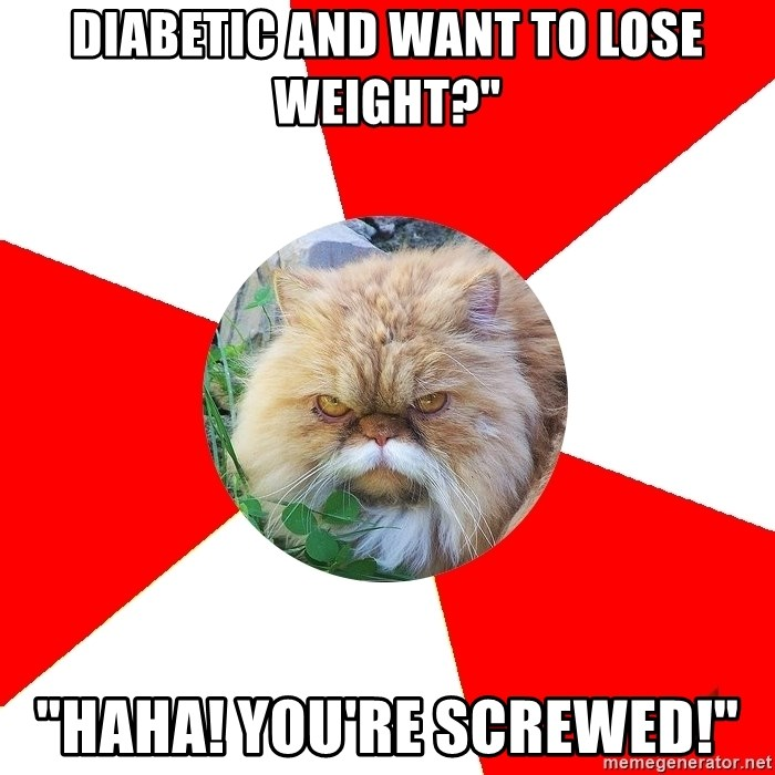 """Diabetic Cat - Diabetic and want to lose weight?"""" """"Haha! You're screwed!"""""""