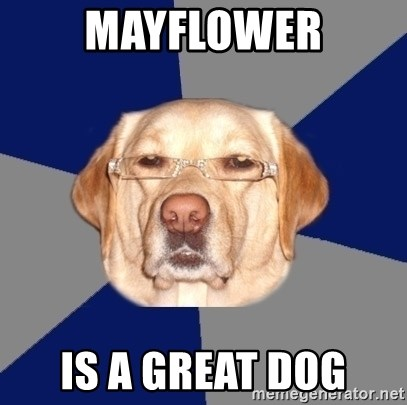 Racist Dog - mAYFLOWER IS A GREAT DOG