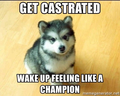 Baby Courage Wolf - Get castrated waKE UP FEELING LIKE A CHAMPION
