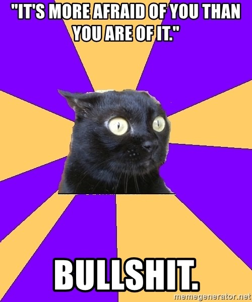 """Anxiety Cat - """"it's more afraid of you than you are of it."""" BULLSHIT."""