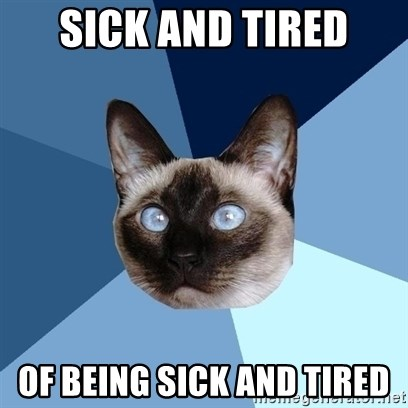 Chronic Illness Cat - sick and tired of being sick and tired