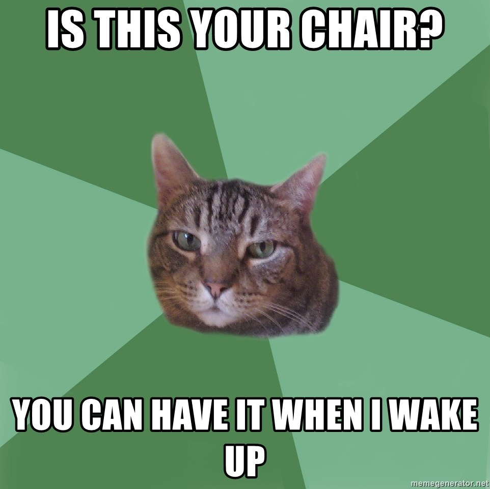 fyeahassholecat - is this your chair? you can have it when i wake up