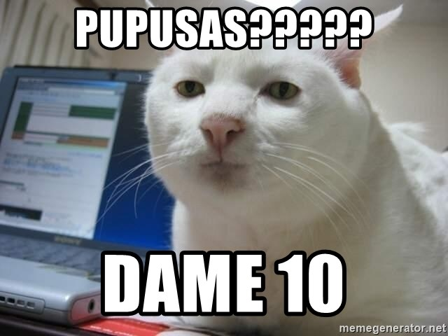 Serious Cat - pupusas????? dame 10