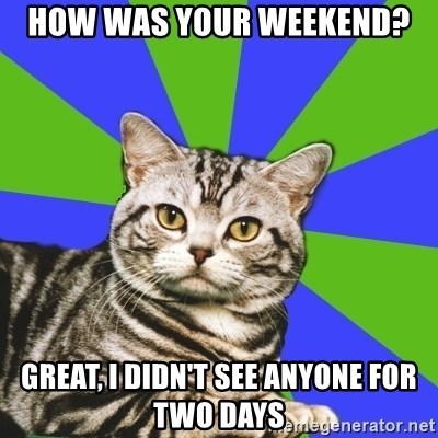 Introvert Cat - How was your weekend? Great, I didn't see anyone for two days