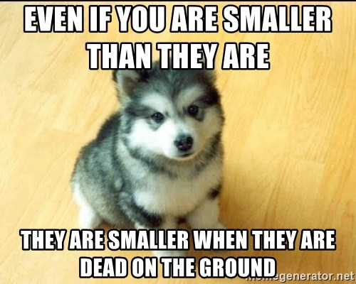 Baby Courage Wolf - Even if you are smaller than they are           They are smaller when they are dead on the ground