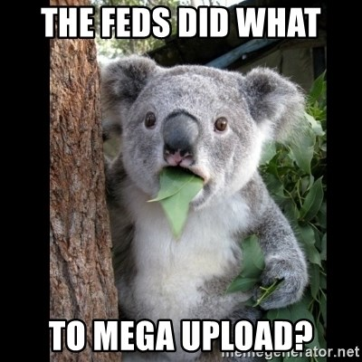 Koala can't believe it - The feds did what to mega upload?