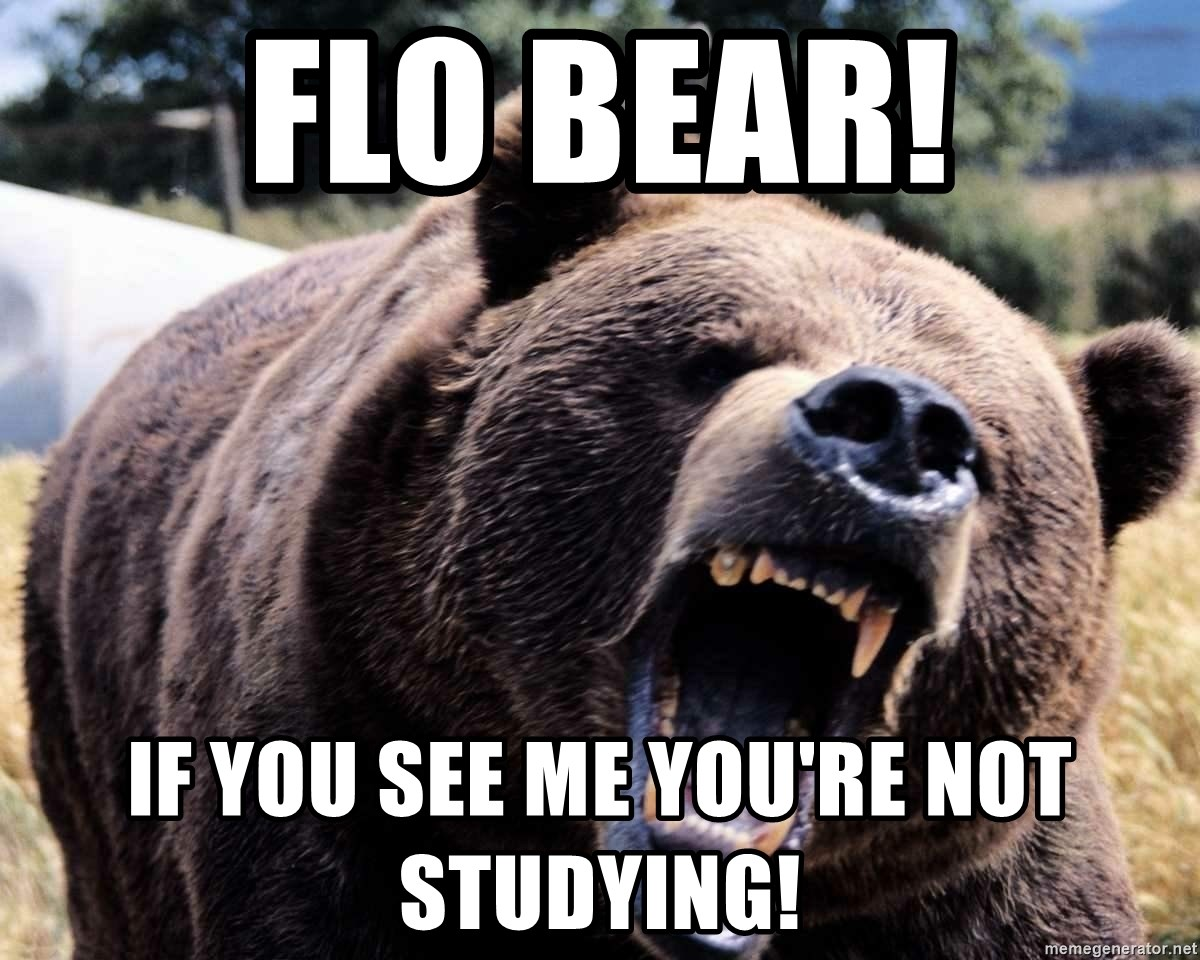FLO BEAR! IF YOU SEE ME YOU'RE NOT STUDYING! - Bear week | Meme