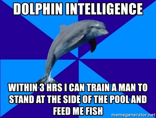 Drama Dolphin - Dolphin Intelligence Within 3 hrs I can Train a man to stand at the side of the pool and feed me fish