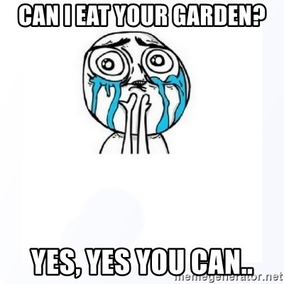 YES YOU CAN - Can i eat your garden? yes, yes you can..