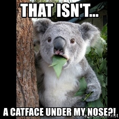Koala can't believe it - that isn't... a catface under my nose?!