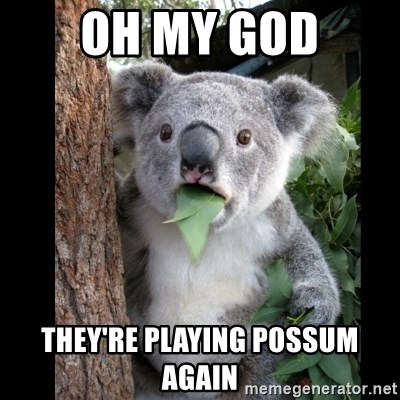 oh my god theyre playing possum again oh my god they're playing possum again koala can't believe it