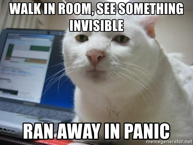 Serious Cat - walk in room, see something invisible ran away in panic