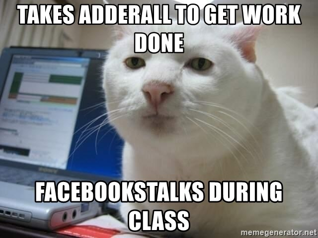 Serious Cat - Takes Adderall To get work done Facebookstalks during class