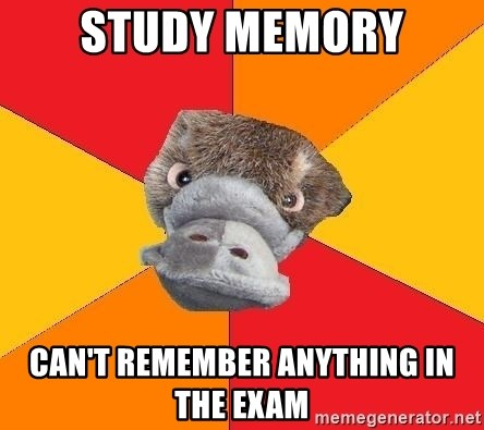 Psychology Student Platypus - study memory can't REMEMBER anything in the exam
