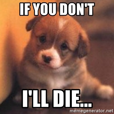 cute puppy - if you don't i'll die...