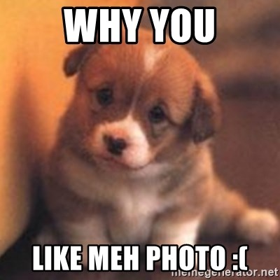 cute puppy - why you like meh photo :(