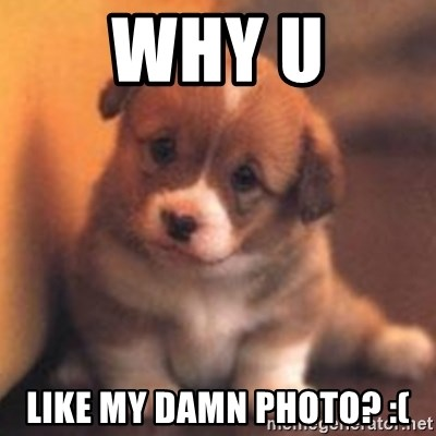 cute puppy - why u like my damn photo? :(